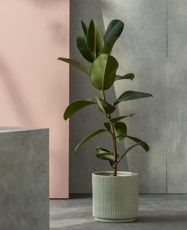 pot plante vert menthe