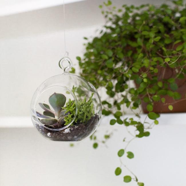 terrarium suspendu diy mini boule