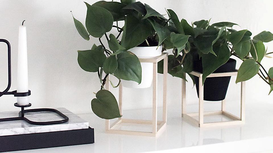 support plante diy