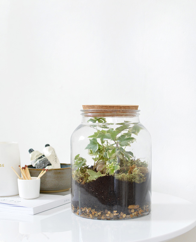 terrarium bocal diy grand