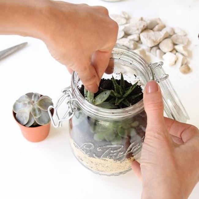terrarium bocal diy conserve