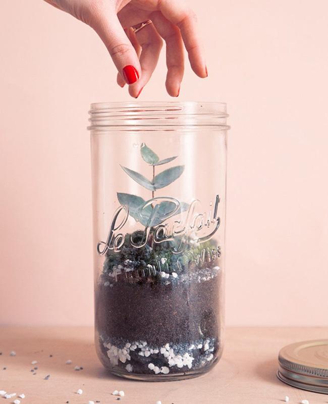 terrarium bocal diy verre