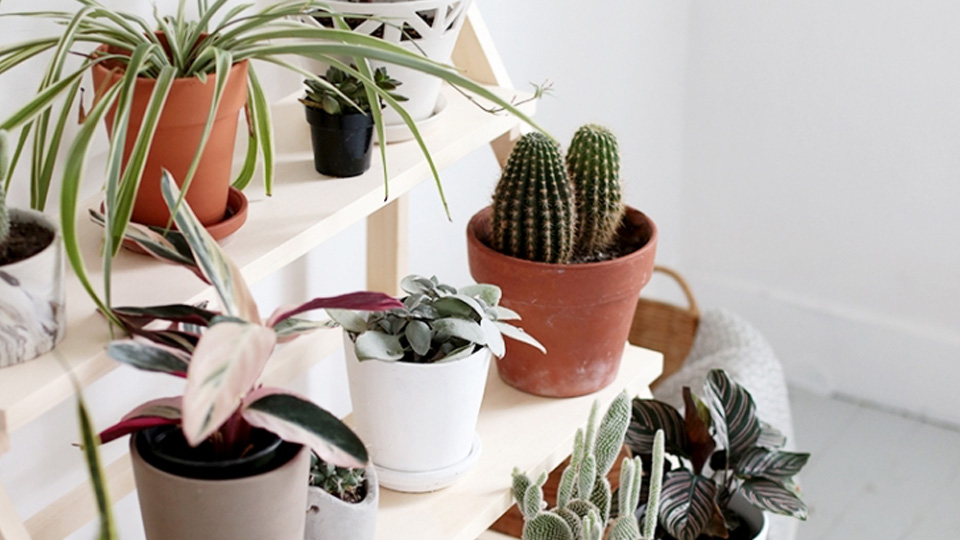 etagere diy plante