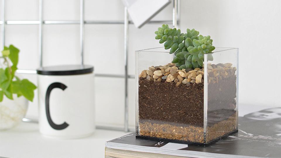 terrarium plante diy