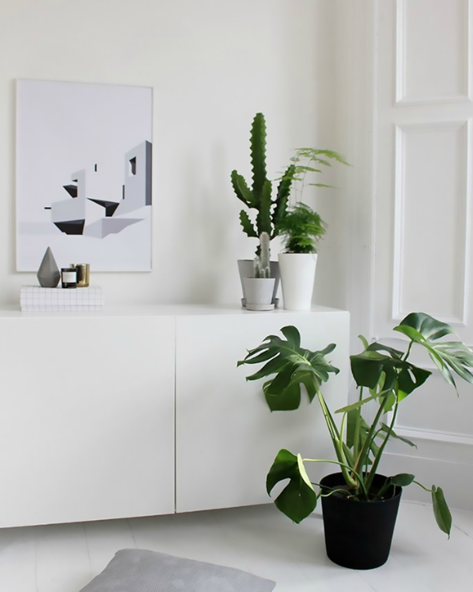 deco plante monstera