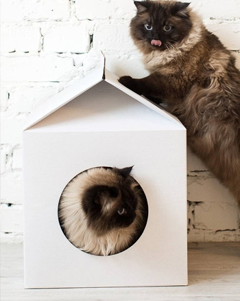 cabane chat carton