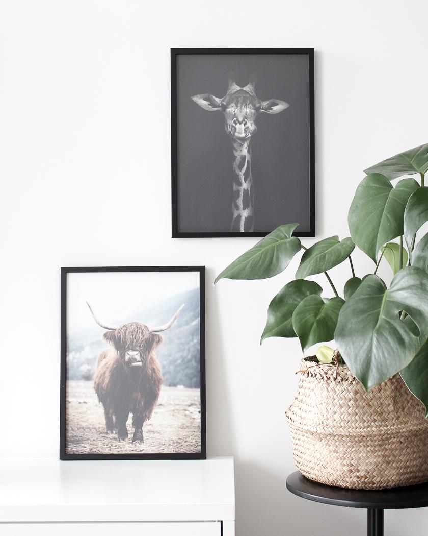 affiche posterstore girafe vache