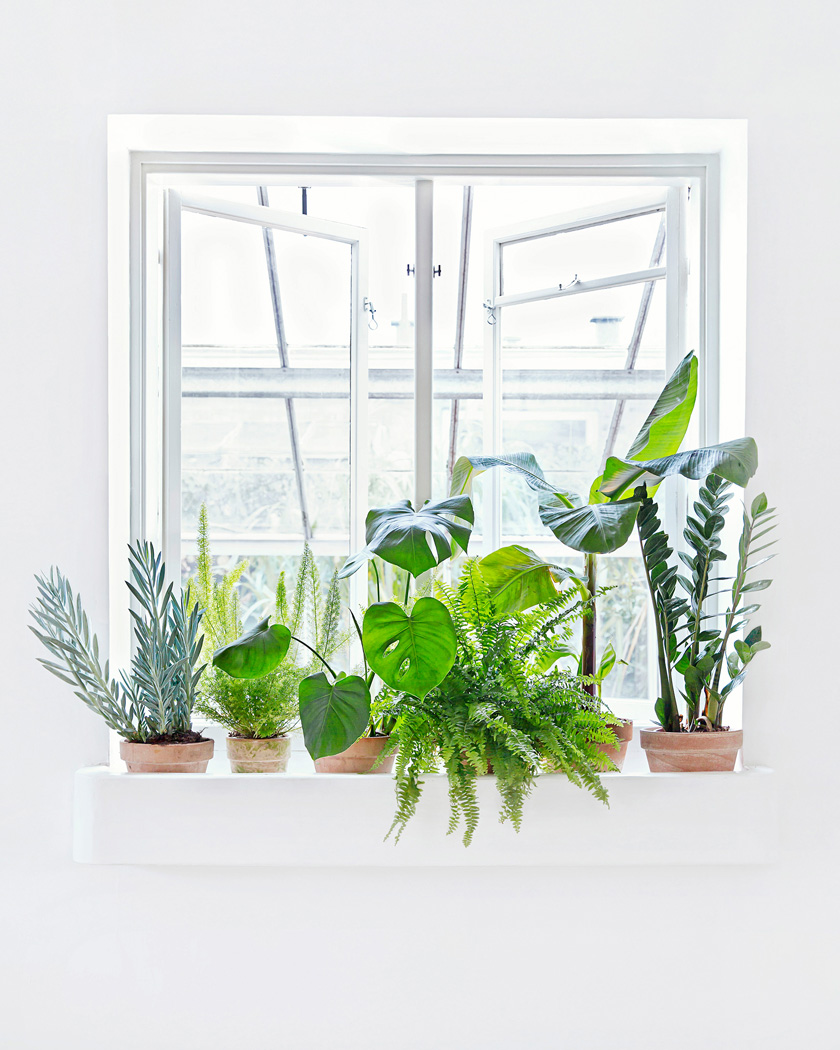 deco fenetre plante