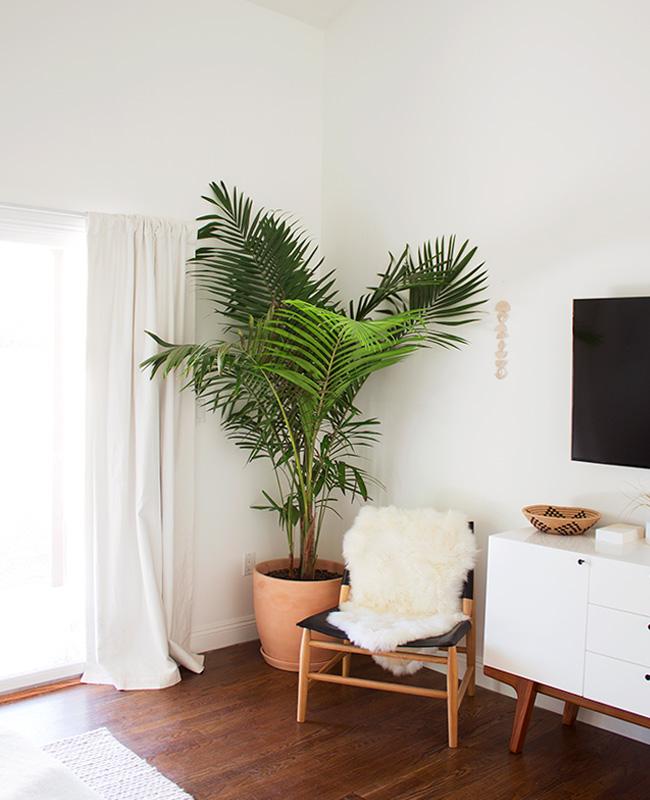 deco frais été plante palmier