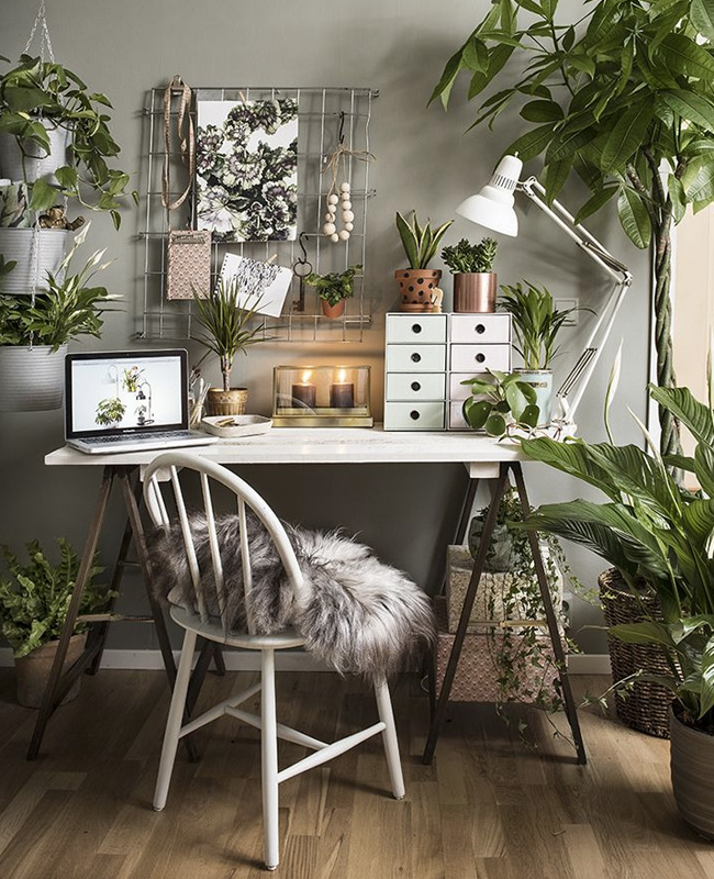 deco bureau urban jungle plantes