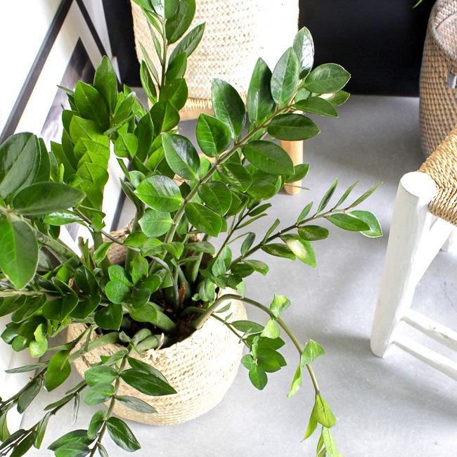 deco éclectique cocooning plante