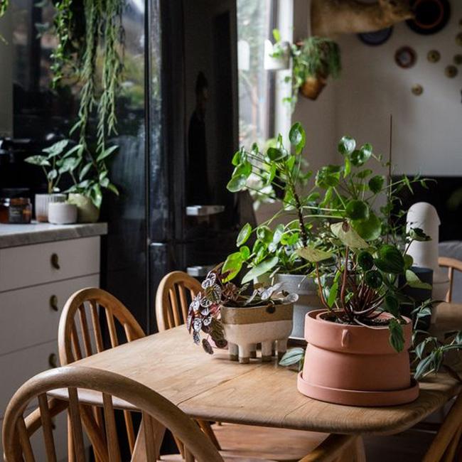 deco séjour cuisine urban jungle