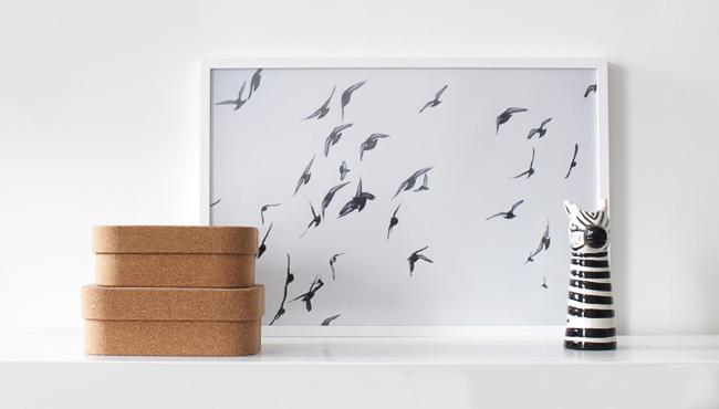 affiche posterlounge oiseaux
