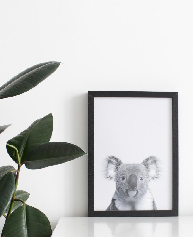 affiche posterlounge koala