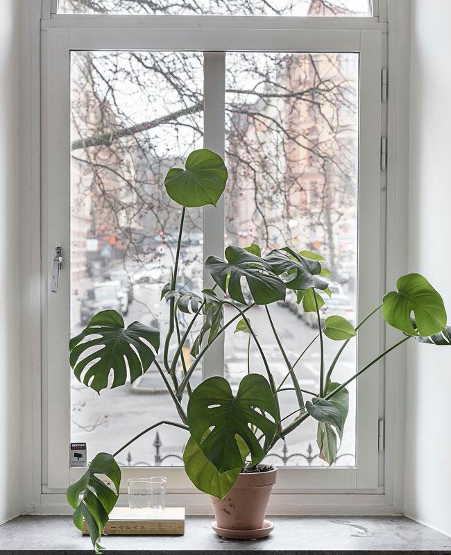 visite deco scandinave zen plante