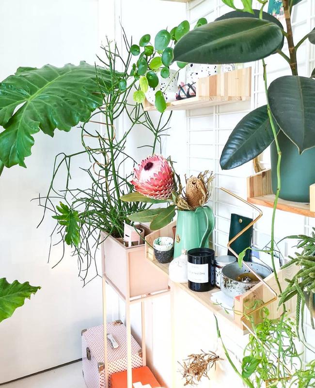insta deco joelix etagere plantes