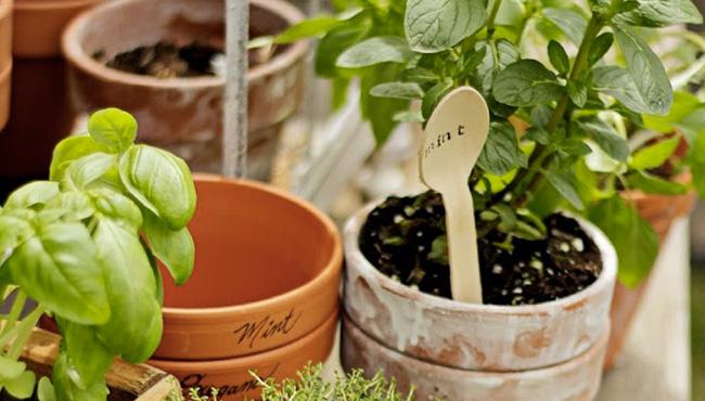 marque plante tuto diy
