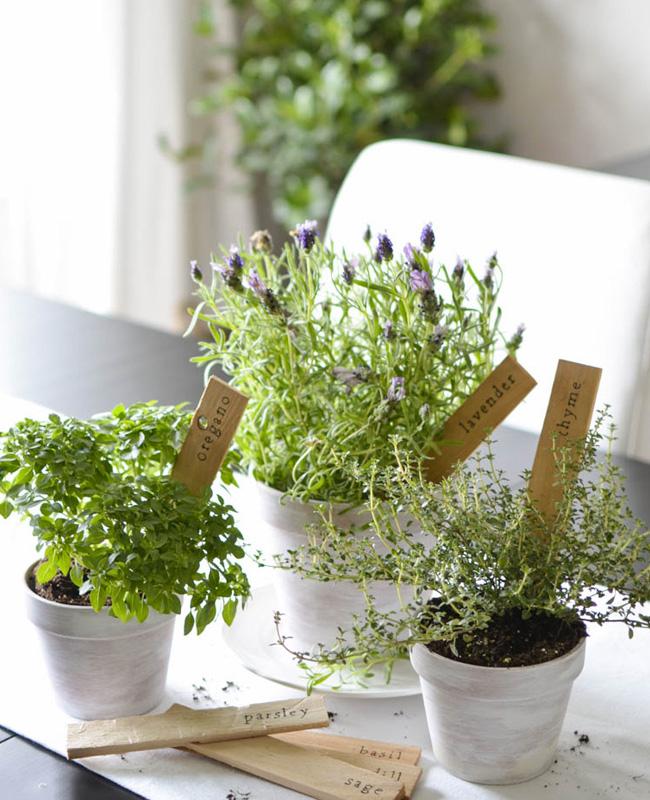 marque plante tuto diy bois